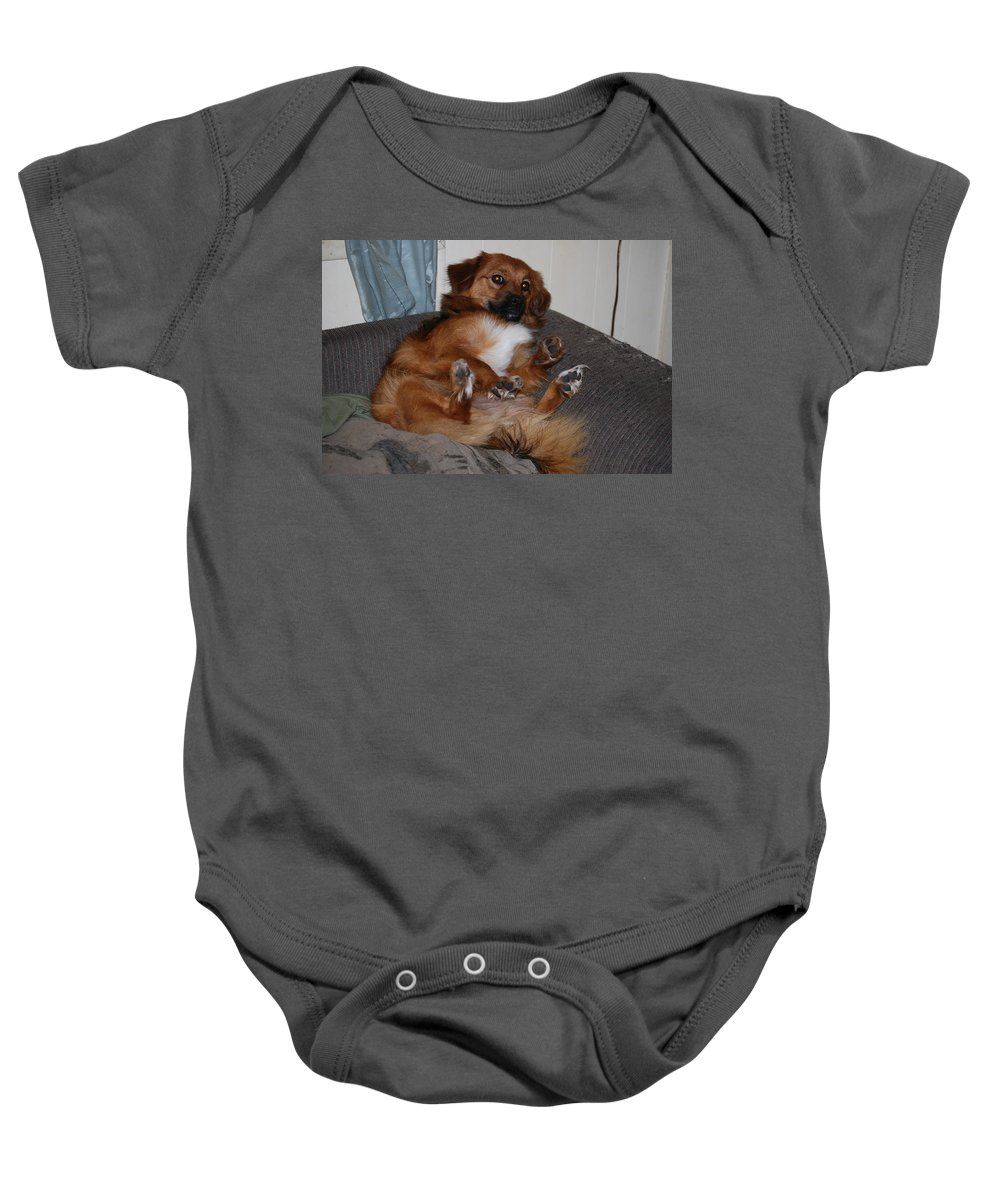 Resting In Comfort.bottoms Up. Dog Baby Onesie featuring the photograph Laying Back by Robert Floyd