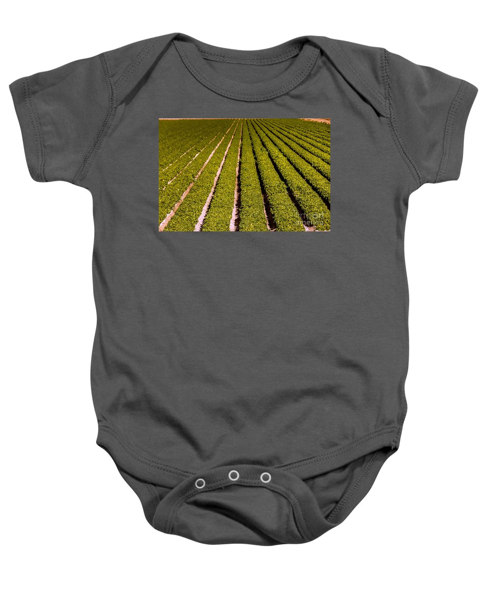 Yuma Baby Onesie featuring the photograph Lettuce Farming by Robert Bales