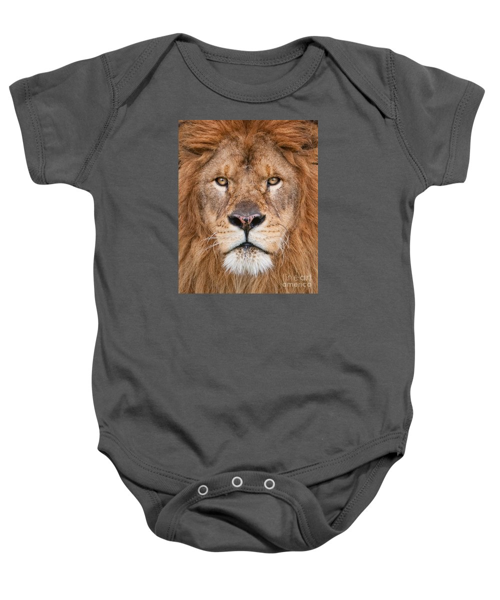 Lion Baby Onesie featuring the photograph Lion Close Up by Jerry Fornarotto