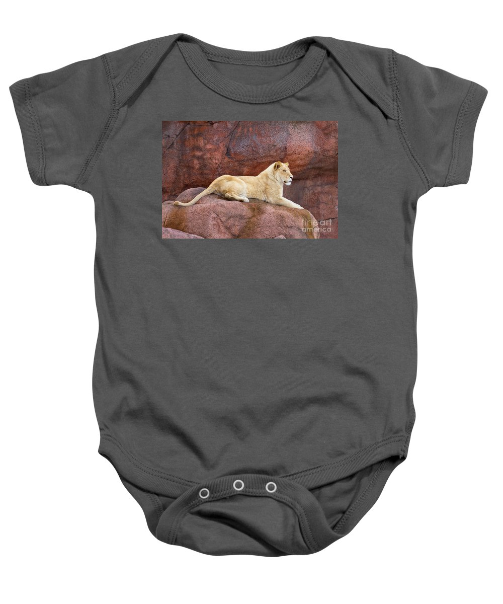 Lion Baby Onesie featuring the photograph Lioness On A Red Rock by Les Palenik