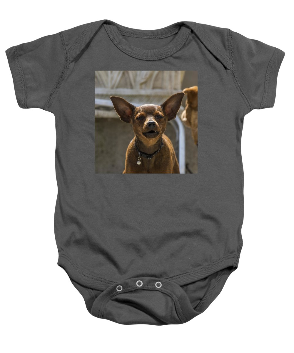 Animal Baby Onesie featuring the photograph Little Dog by Paulo Goncalves