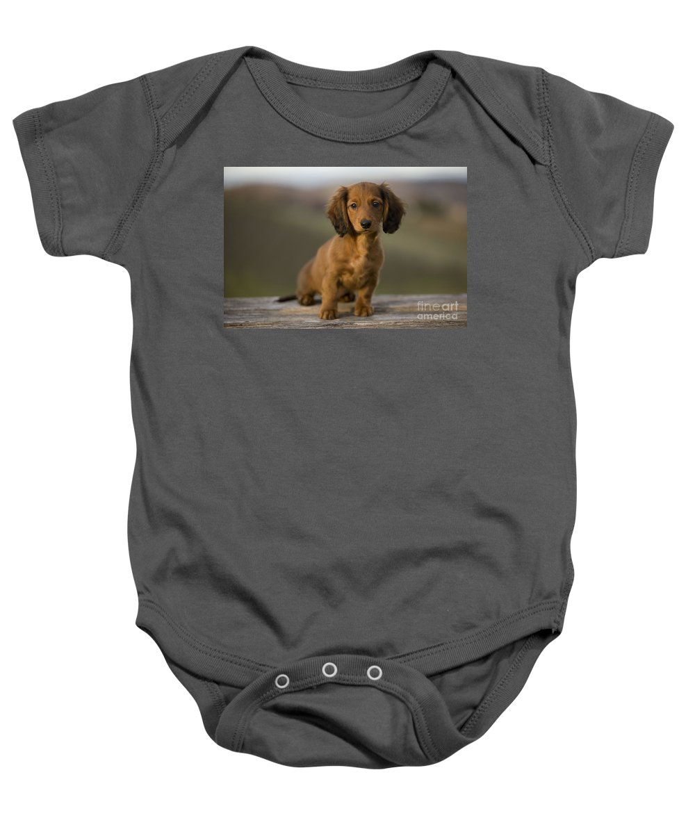 e172f0d4f Long-haired Dachshund Baby Onesie featuring the photograph Long-haired  Dachshund Puppy by Jean