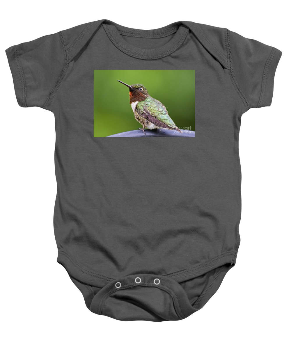 Humming Bird Baby Onesie featuring the photograph Male Ruby Throated Hummingbird by TJ Baccari