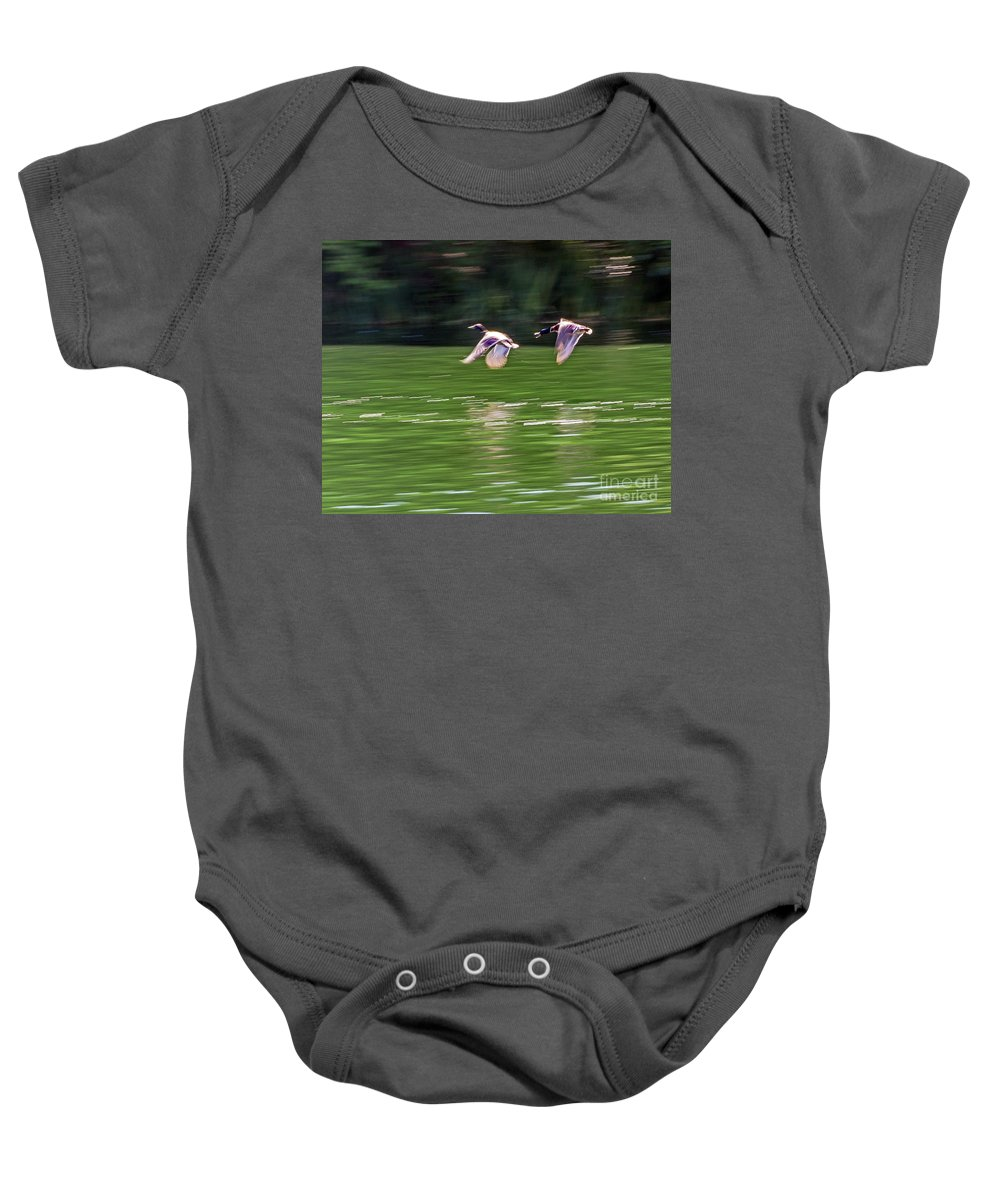 Anas Platyrhynchos Baby Onesie featuring the photograph Mallard Chase by Kate Brown