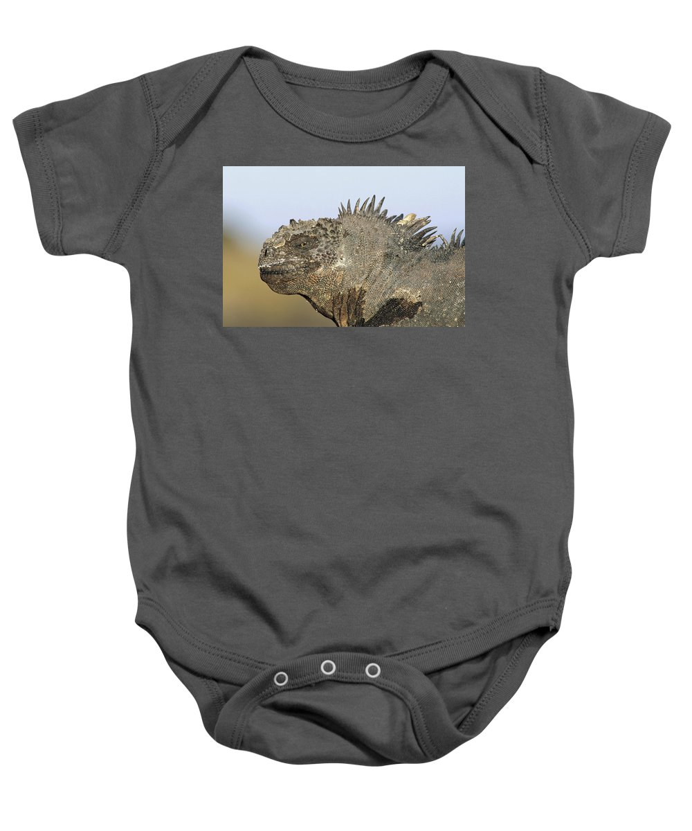 Feb0514 Baby Onesie featuring the photograph Marine Iguana Male Santa Cruz Island by Tui De Roy