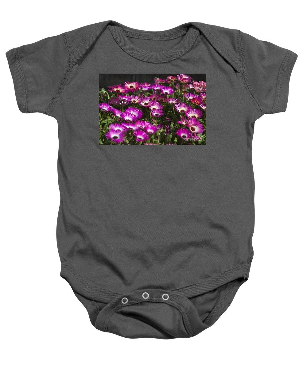 Mesembryanthemum Baby Onesie featuring the photograph Mesembryanthemums 3 by Steve Purnell