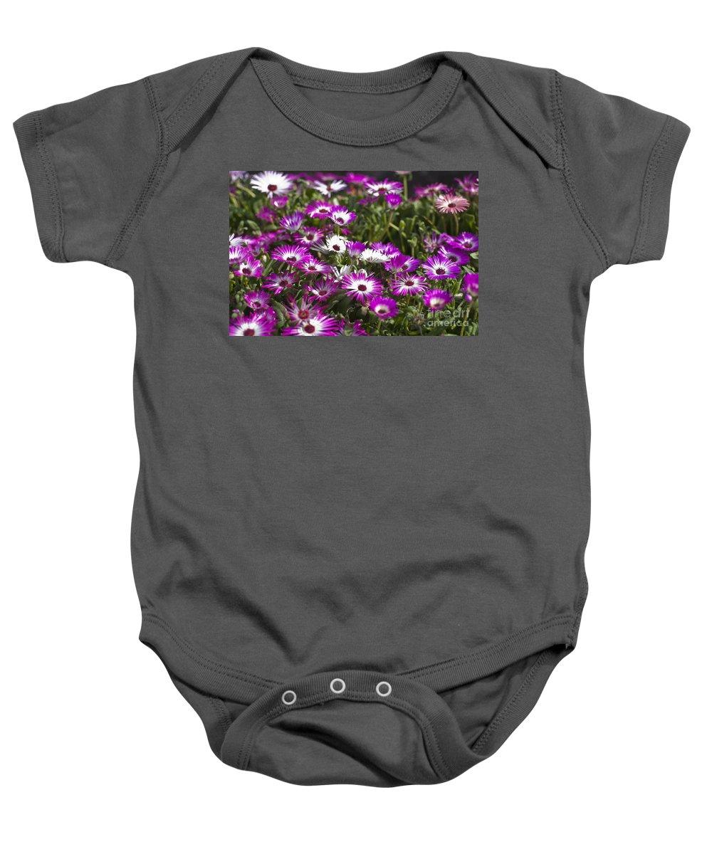 Mesembryanthemum Baby Onesie featuring the photograph Mesembryanthemums 5 by Steve Purnell