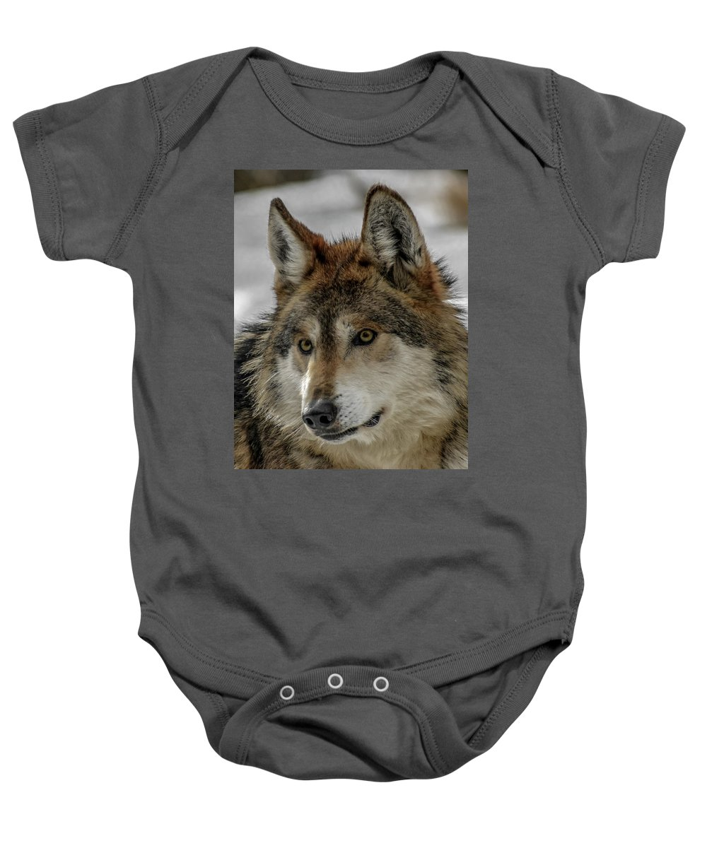 Wolf Baby Onesie featuring the photograph Mexican Grey Wolf Upclose by Ernie Echols