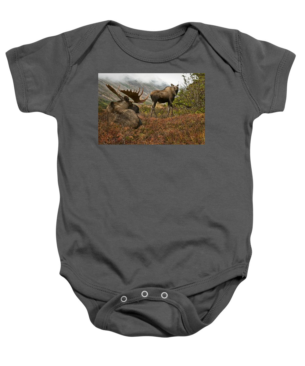 Moose Baby Onesie featuring the photograph Moose Pair On Anchorage Hillside by Eberhard Brunner