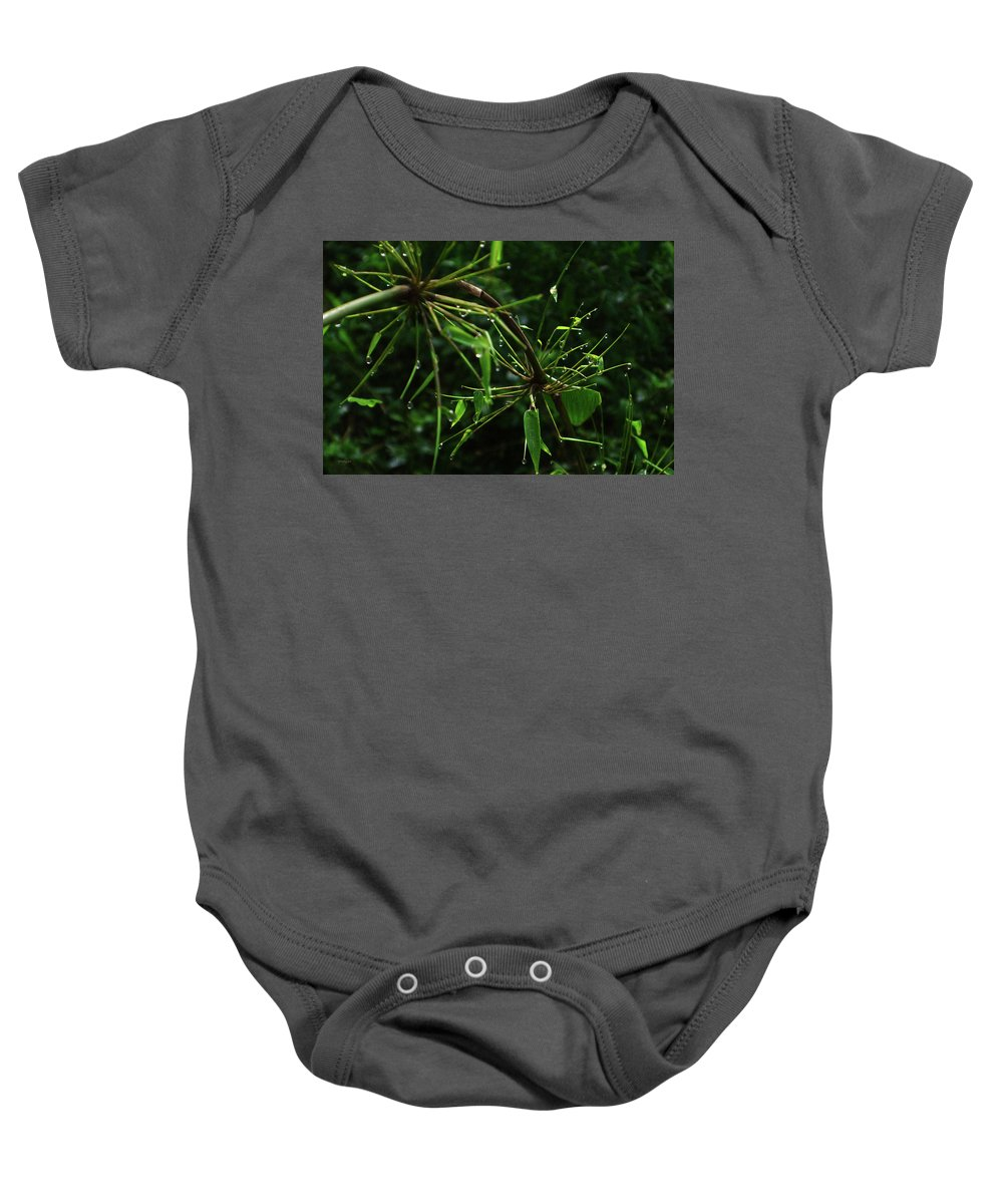 Dew Baby Onesie featuring the photograph Morning Dews by Xueling Zou