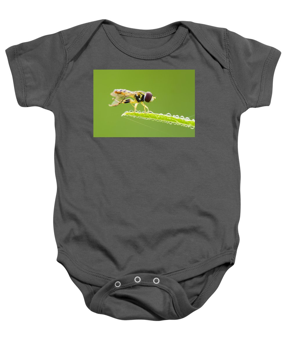 Background Baby Onesie featuring the photograph Morning Hoverfly by Mircea Costina Photography