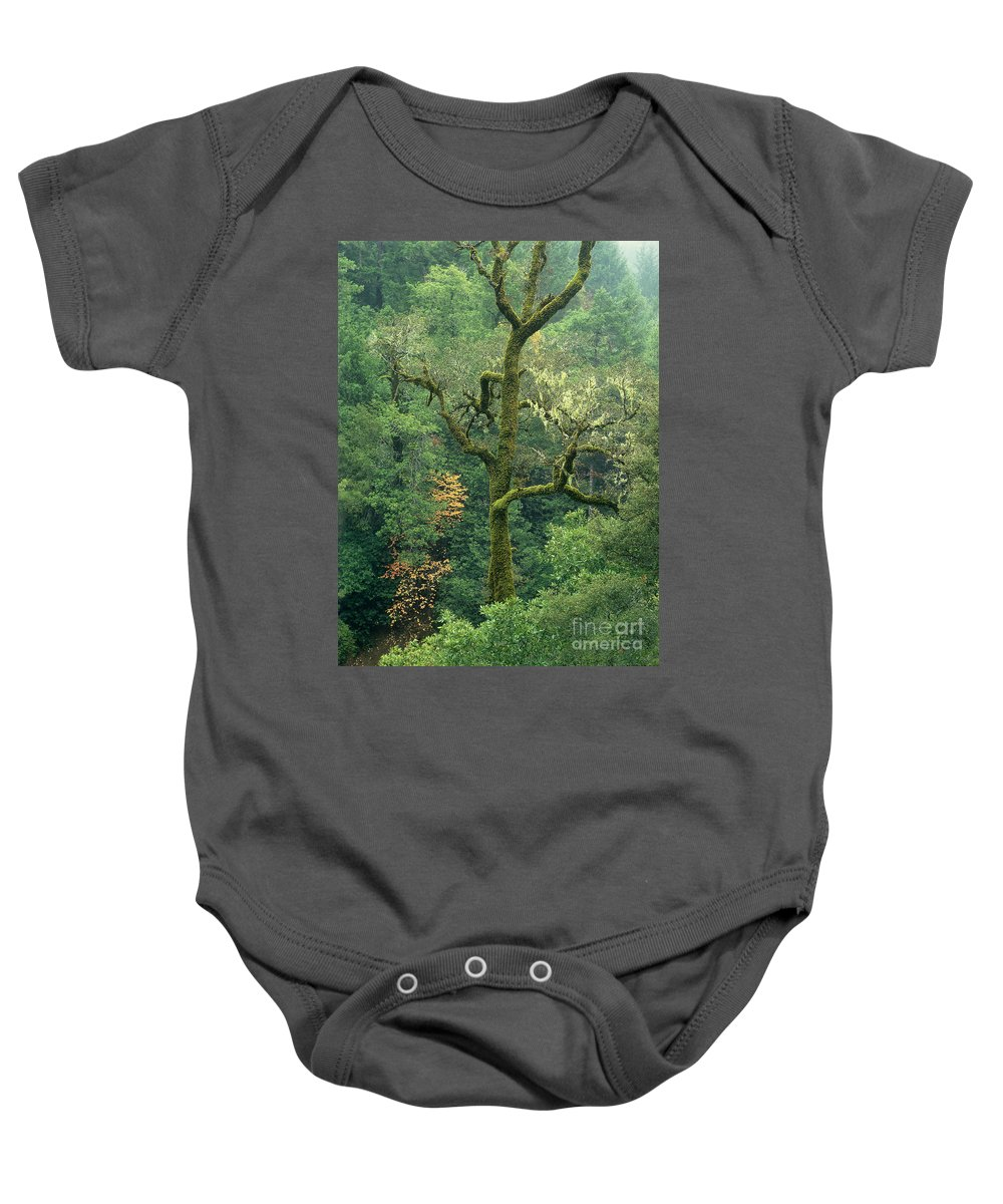 North America Baby Onesie featuring the photograph Moss Covered Tree Central California by Dave Welling