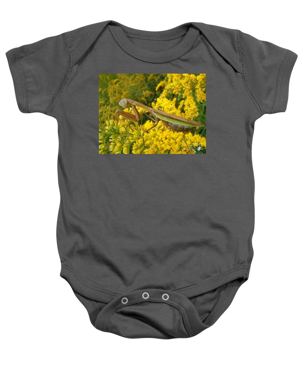 Praying Mantis Baby Onesie featuring the photograph Mr. Mantis by Sara Raber