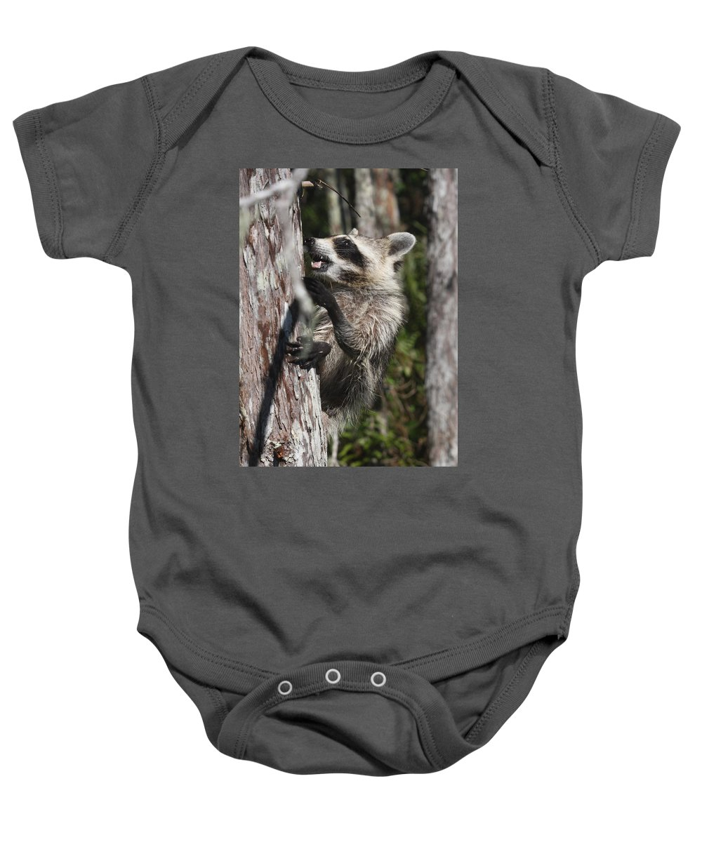 Raccoon Baby Onesie featuring the photograph Nasty Raccoon In A Tree by Christiane Schulze Art And Photography