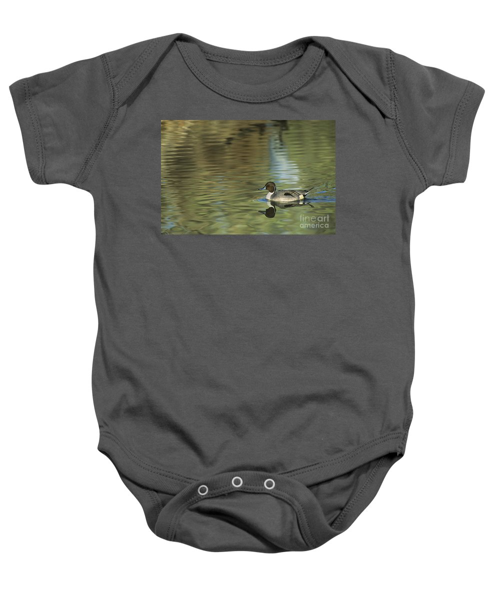 North America Baby Onesie featuring the photograph Northern Pintail In A Quiet Pond California Wildlife by Dave Welling