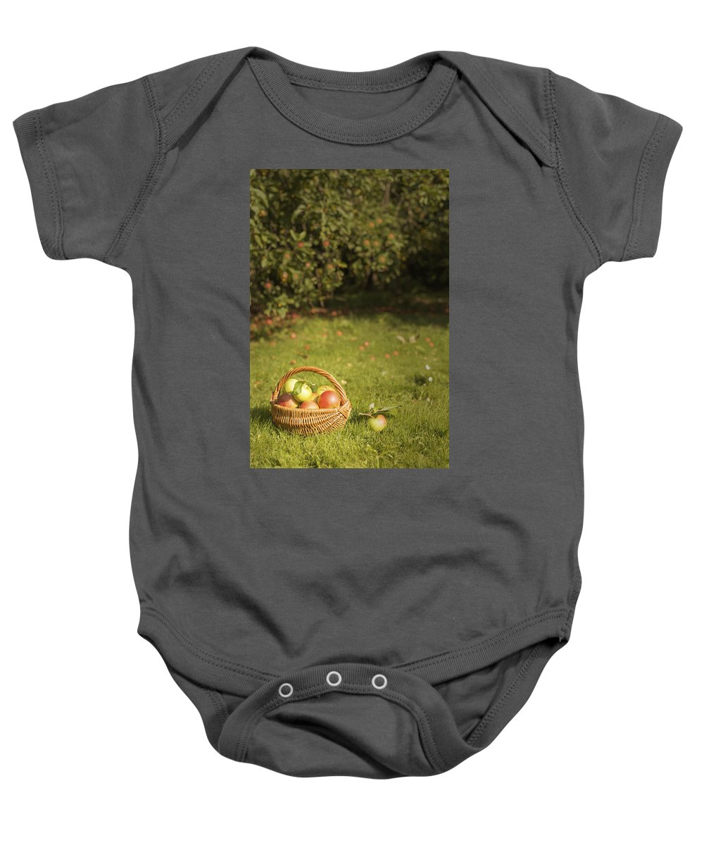Apples Baby Onesie featuring the photograph Orchard by Amanda Elwell