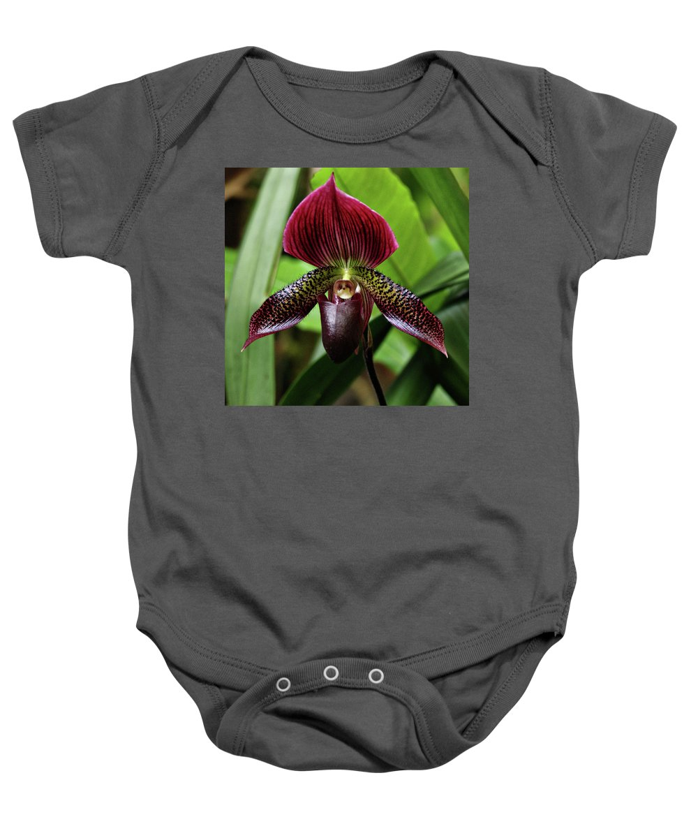 Orchid Baby Onesie featuring the photograph Orchid by Sandy Keeton