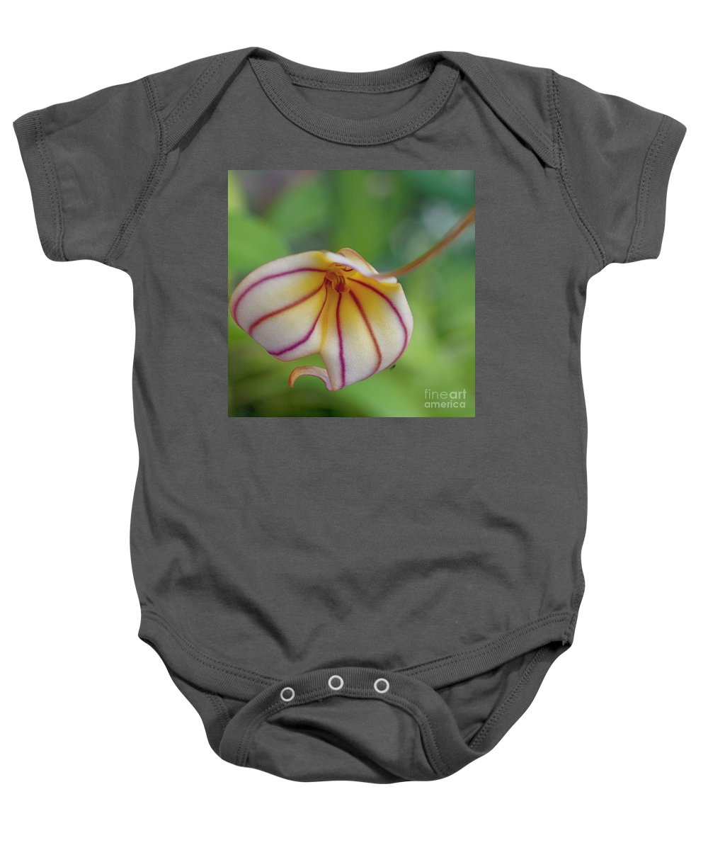 Orchid Baby Onesie featuring the photograph Orchids - Masdevallia Hybrid by Heiko Koehrer-Wagner