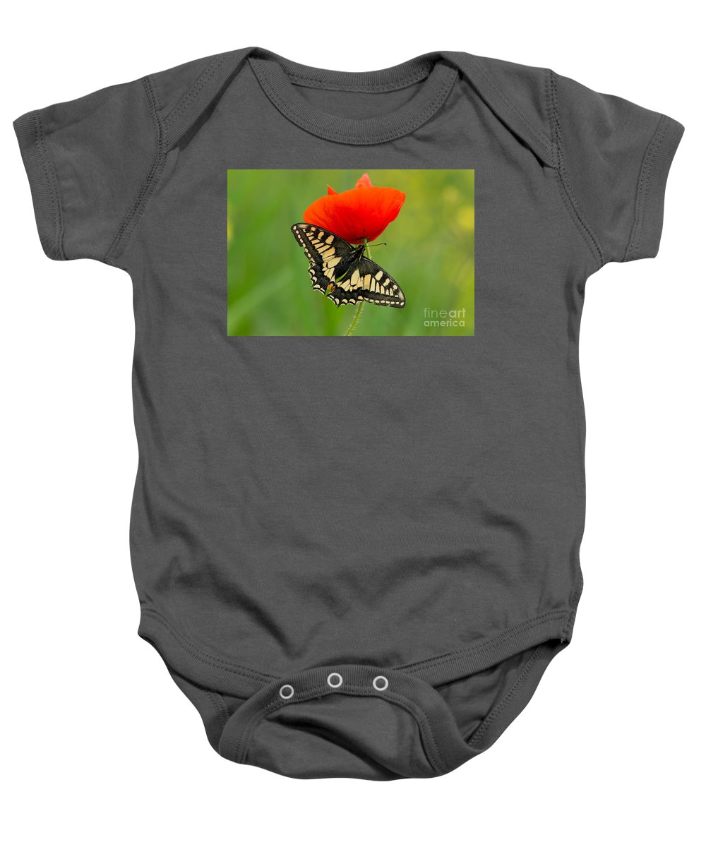 Macro Baby Onesie featuring the photograph Papilio Machaon Butterfly Sitting On A Red Poppy by Jaroslaw Blaminsky
