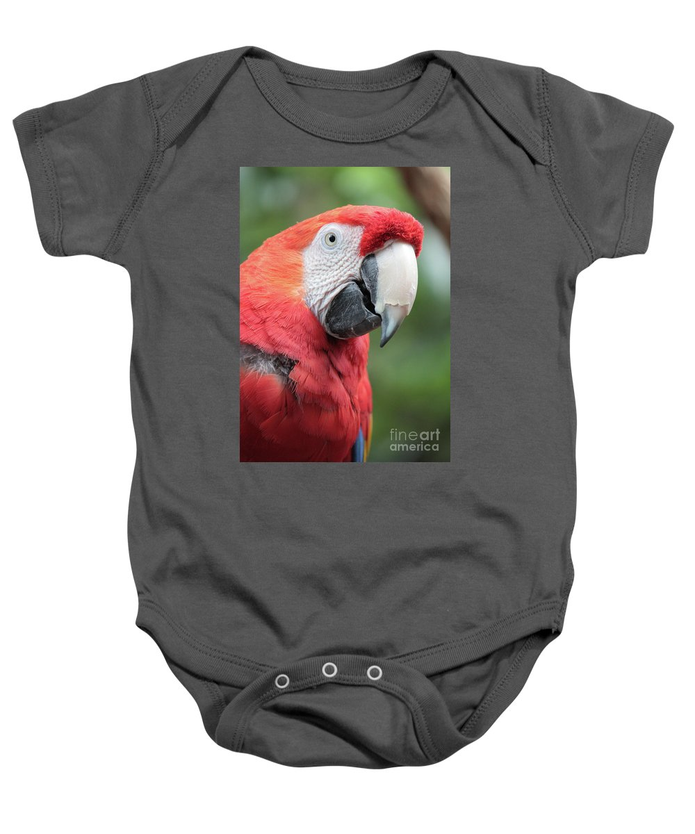 Parrot Baby Onesie featuring the photograph Parrot Profile by Carol Groenen