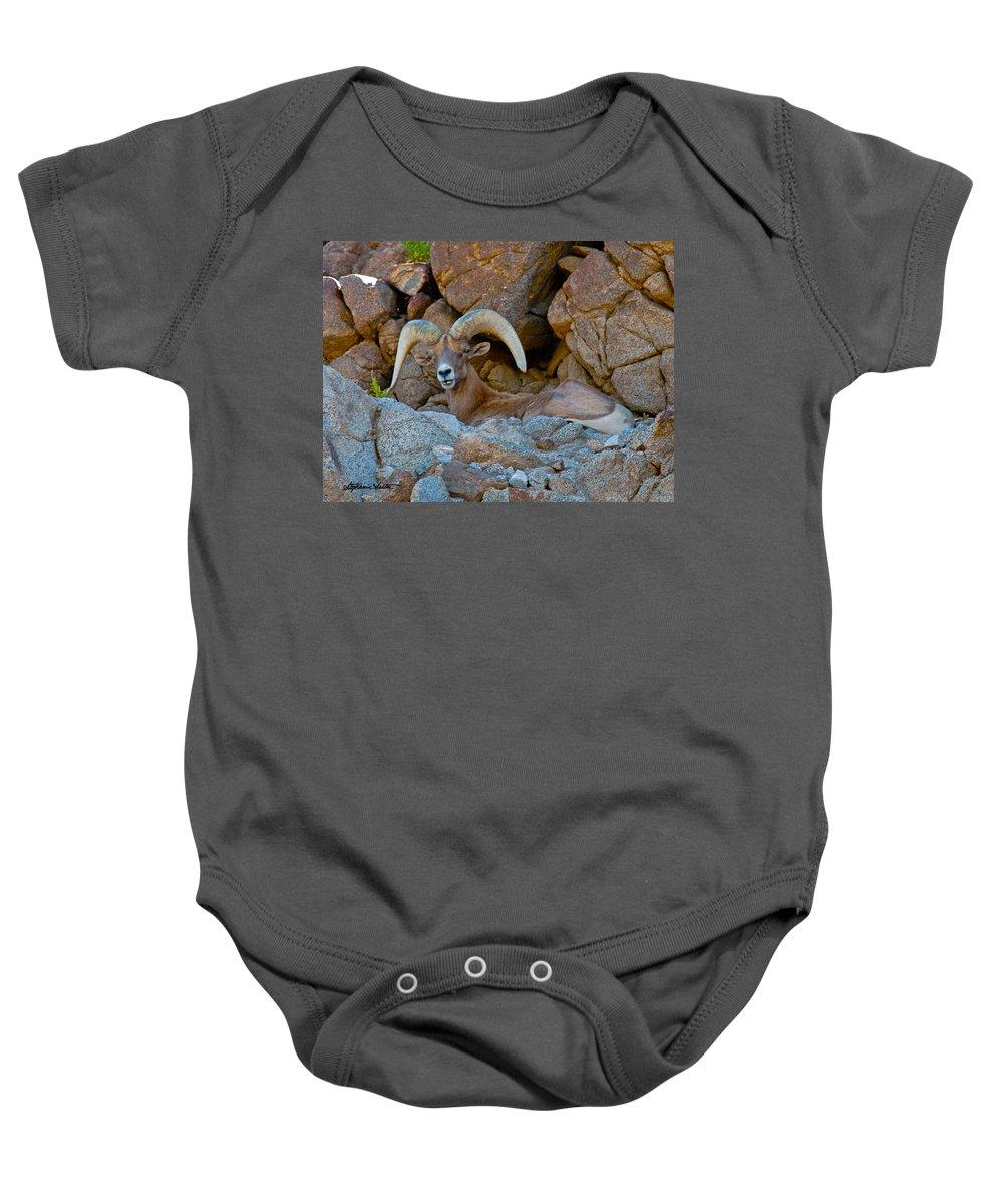 Nature Baby Onesie featuring the photograph Peninsular Desert Bighorn by Stephanie Salter