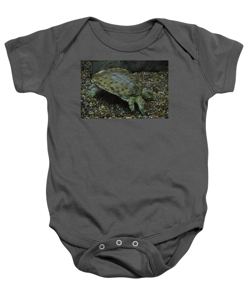 Pig-nosed Turtle Baby Onesie featuring the photograph Pig-nosed Turtle by Maria Urso