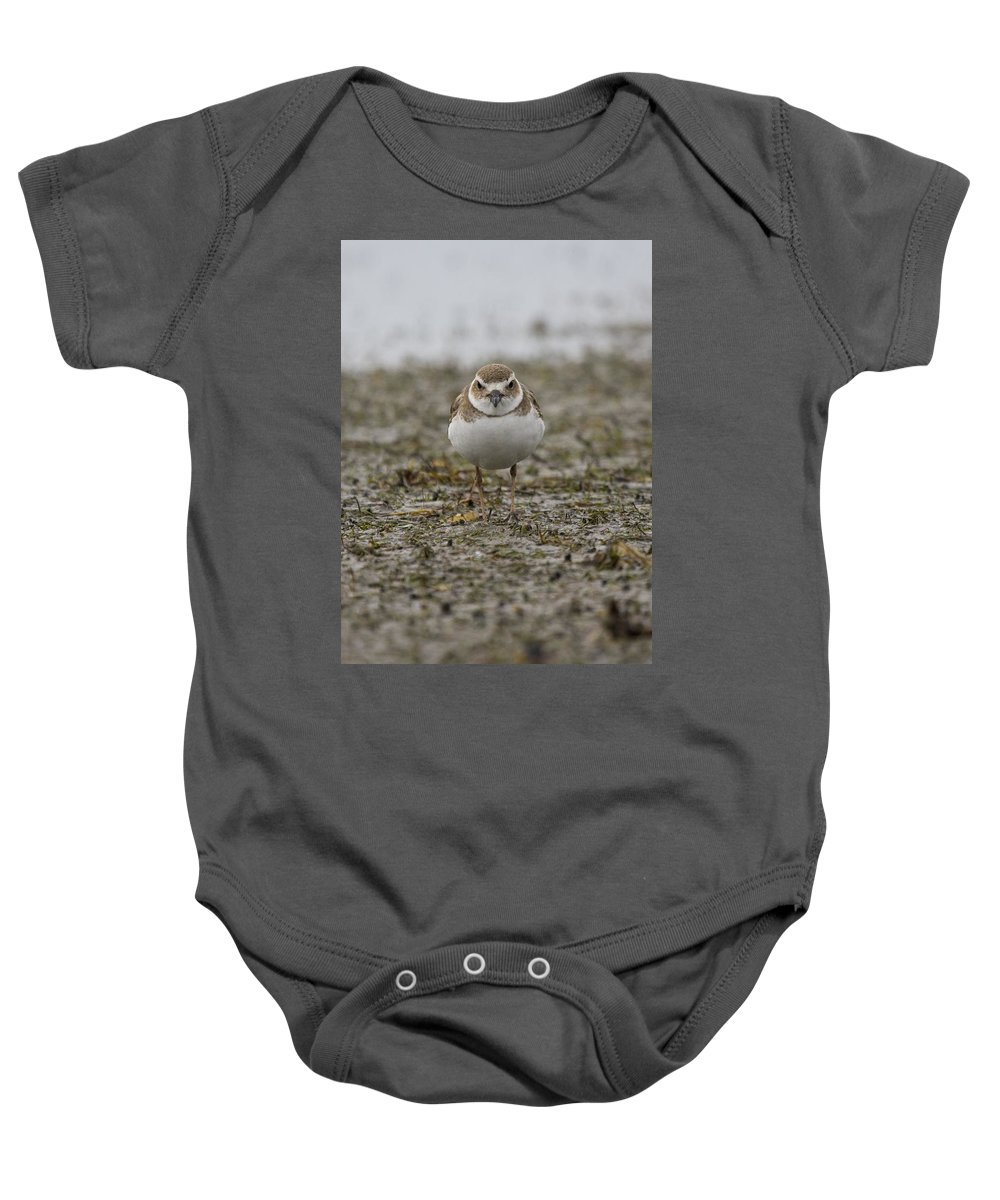 Plover Baby Onesie featuring the photograph Plover by Sandy Swanson