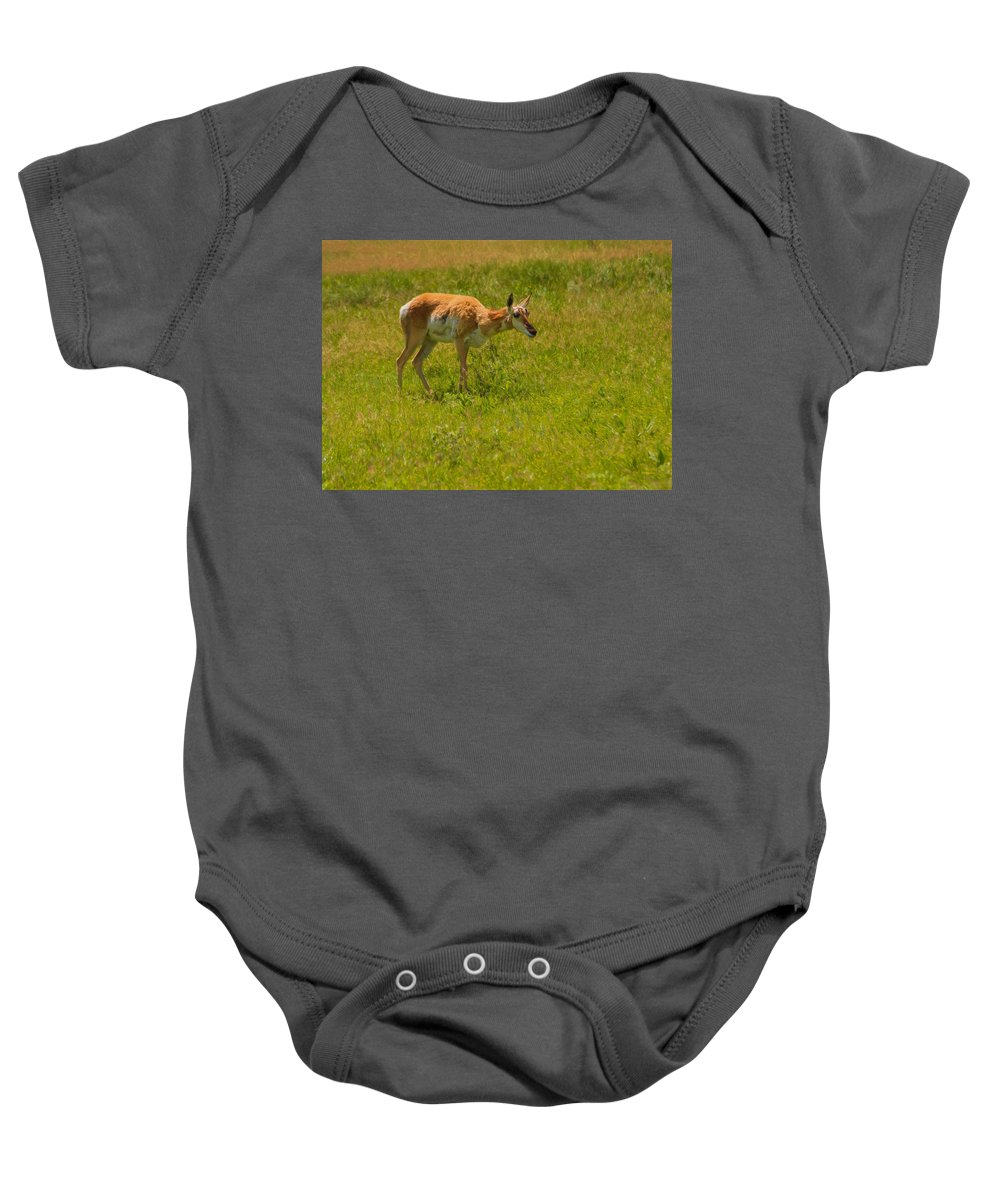 Antilocapra Americana Baby Onesie featuring the photograph Portrait Of A Young Pronghorn by John M Bailey