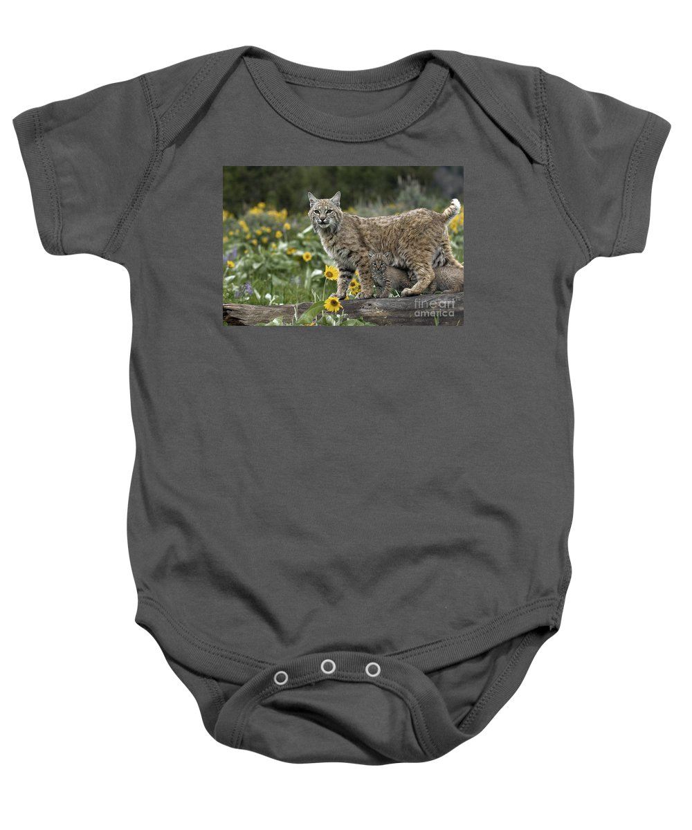Bobcat And Kittens Baby Onesie featuring the photograph Protection by Wildlife Fine Art