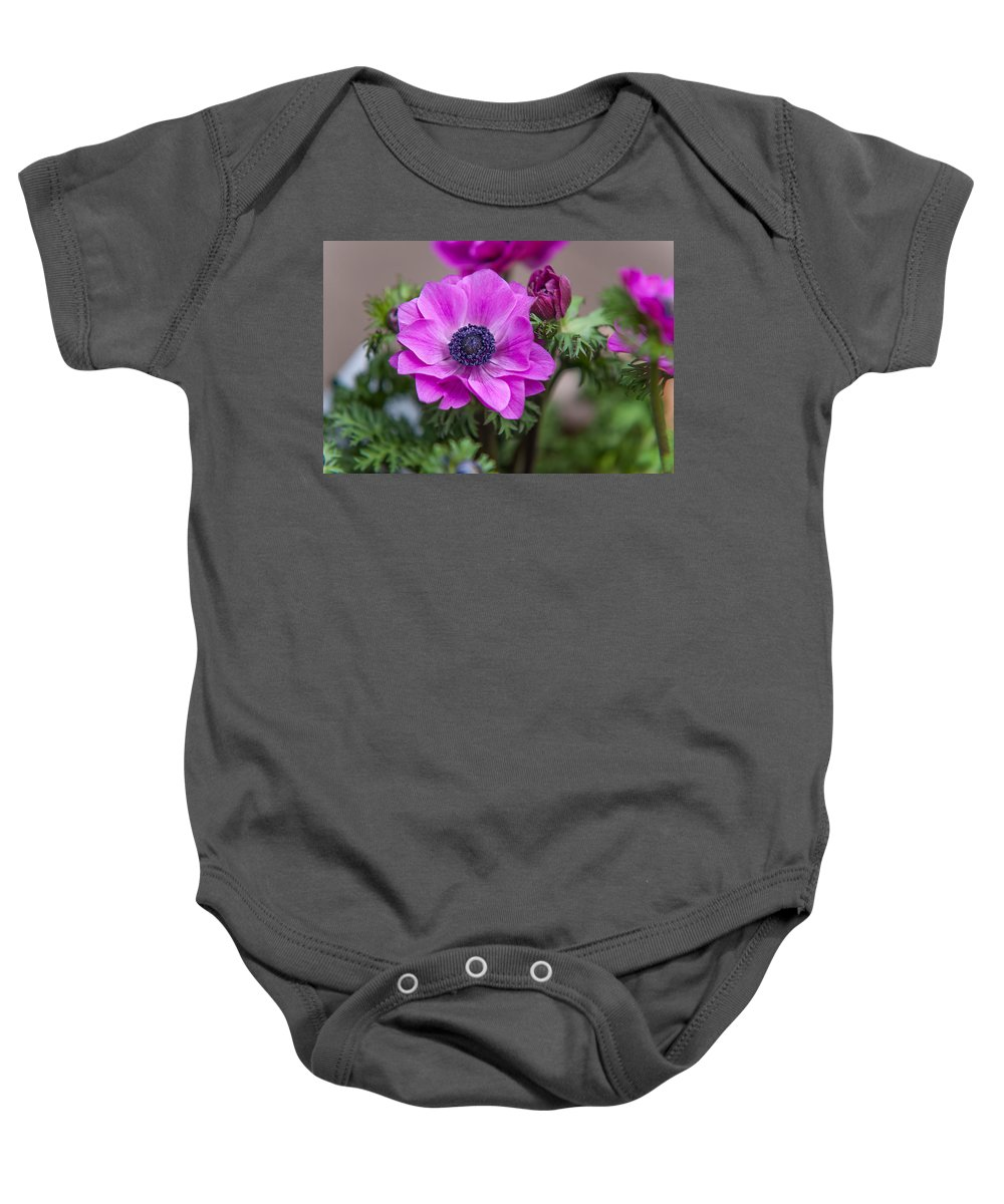 Flower Baby Onesie featuring the photograph Purple Anemone. Flowers Of Holland by Jenny Rainbow