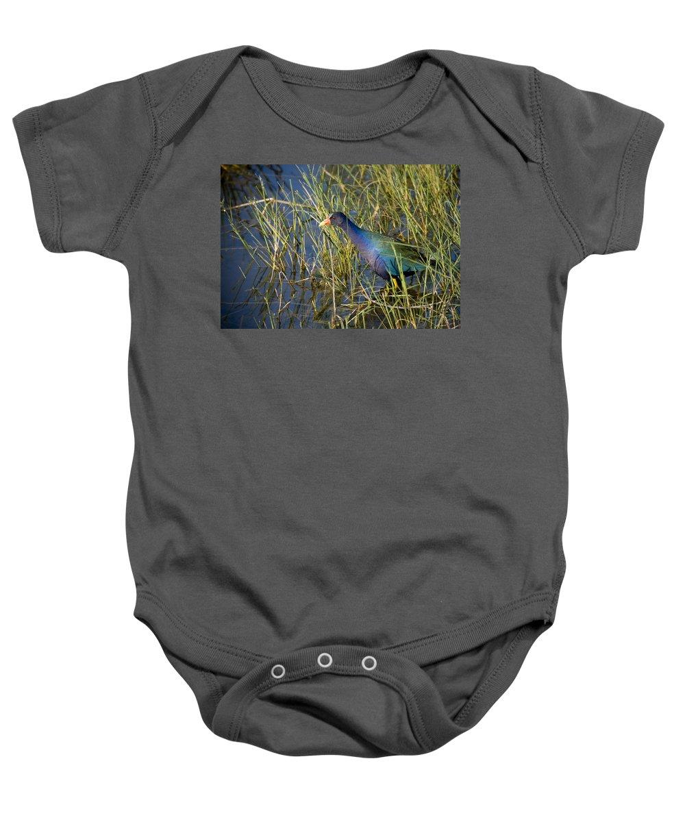 Purple Baby Onesie featuring the photograph Purple Gallinule 2 by Sandy Swanson