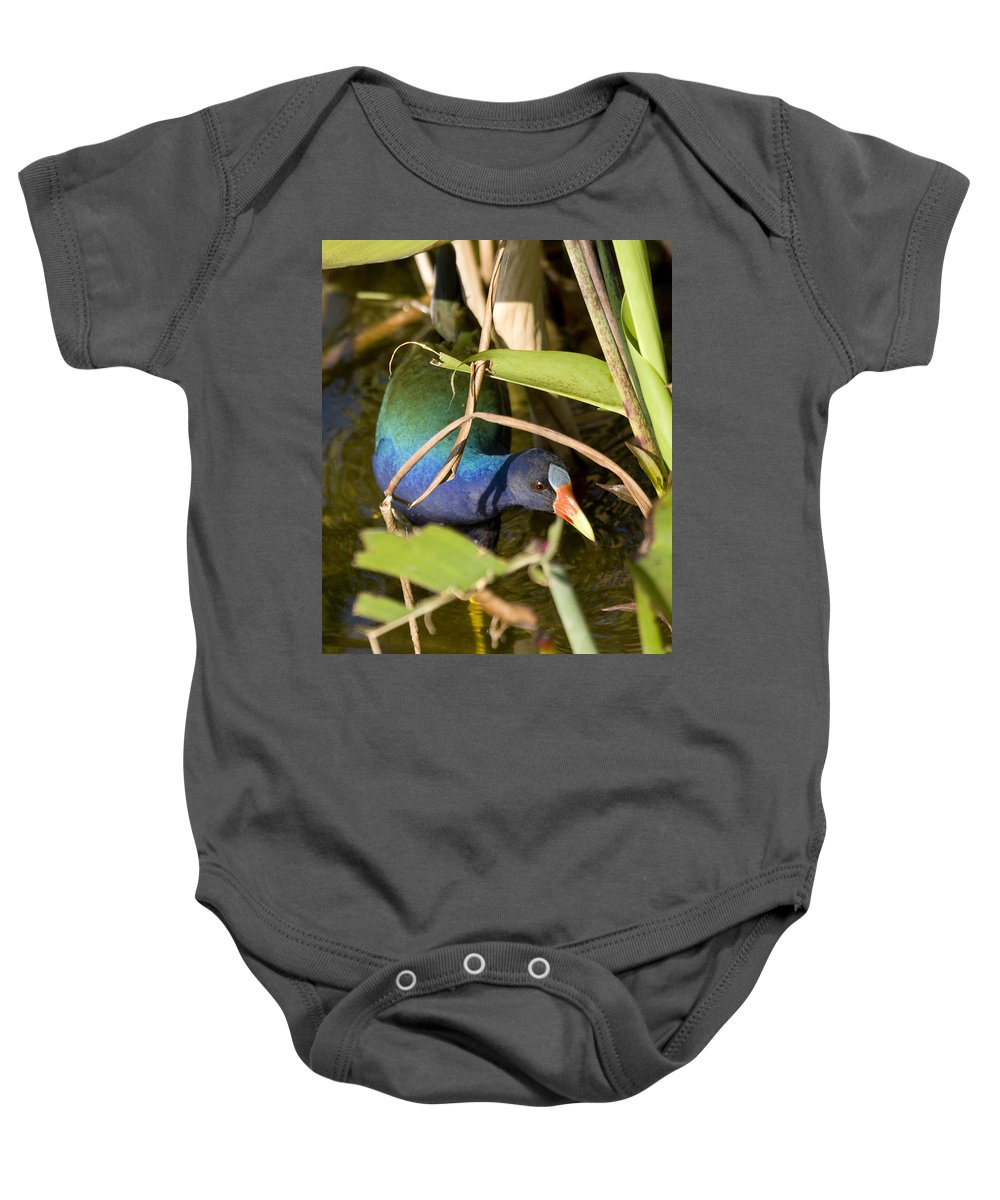 Purple Baby Onesie featuring the photograph Purple Gallinule by Sandy Swanson