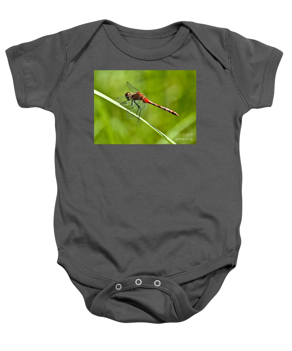 Common Red Darter Baby Onesie featuring the photograph Red Darter by Cheryl Baxter