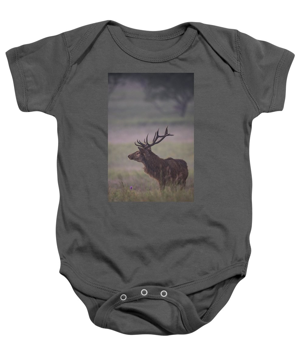 Red Deer Baby Onesie featuring the photograph Red by Jack Milchanowski