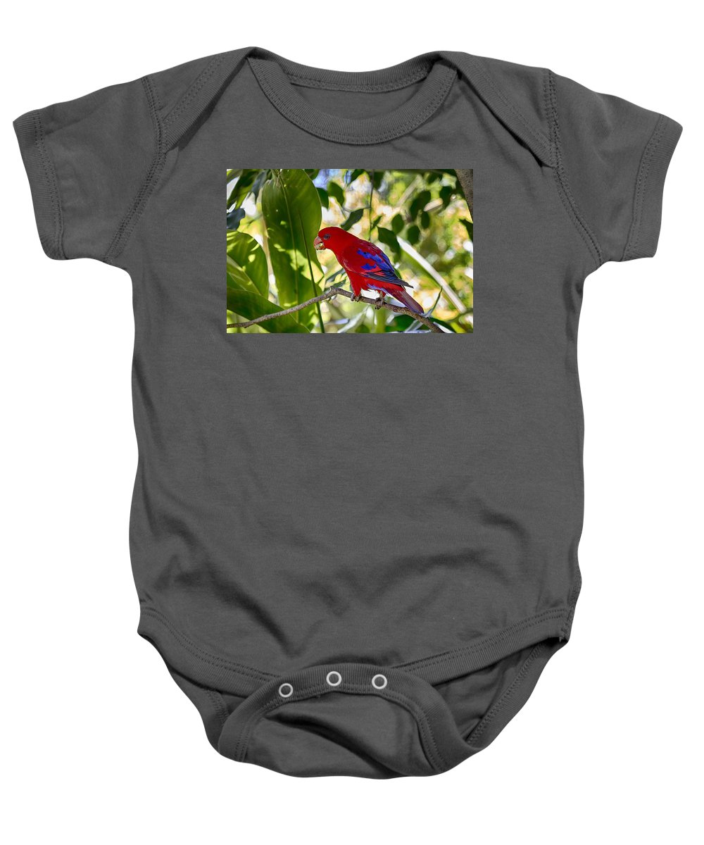 Red Lory Baby Onesie featuring the photograph Red Lory by Douglas Barnard