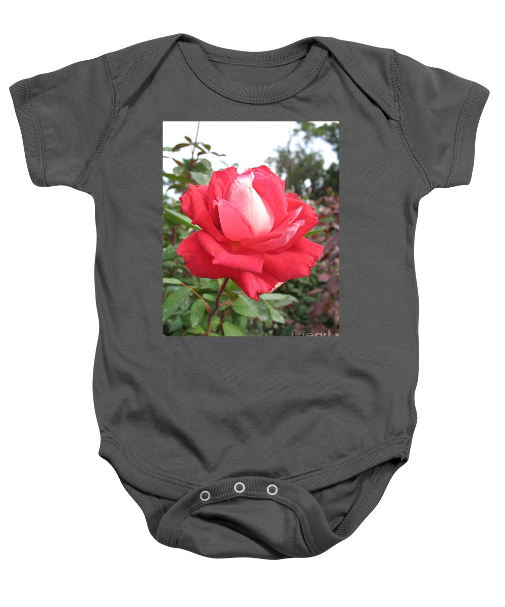 Rose Baby Onesie featuring the photograph Red-white Rose by Christiane Schulze Art And Photography