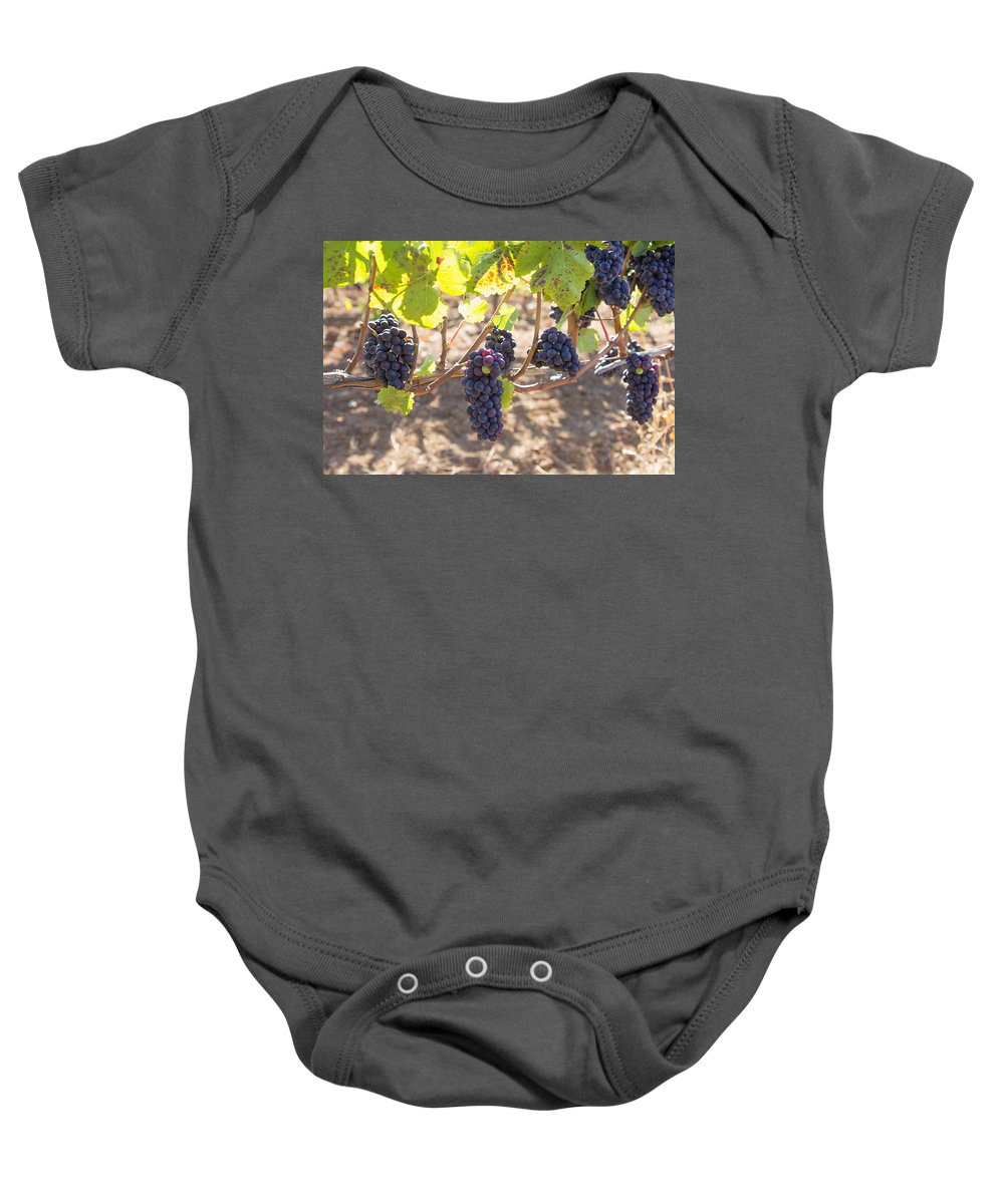 Grapes Baby Onesie featuring the photograph Red Wine Grapes Hanging On Grapevines by Jit Lim
