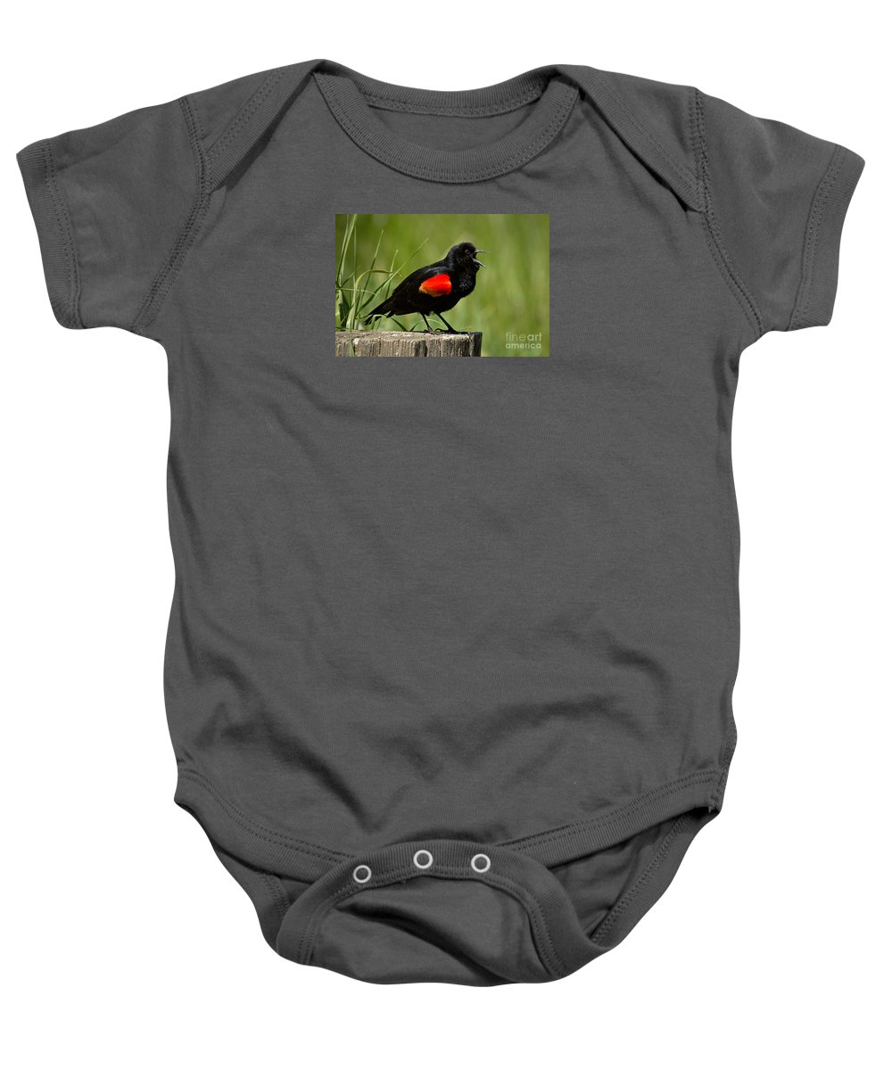 Bird Baby Onesie featuring the photograph Red-winged Blackbird Singing by Alice Cahill
