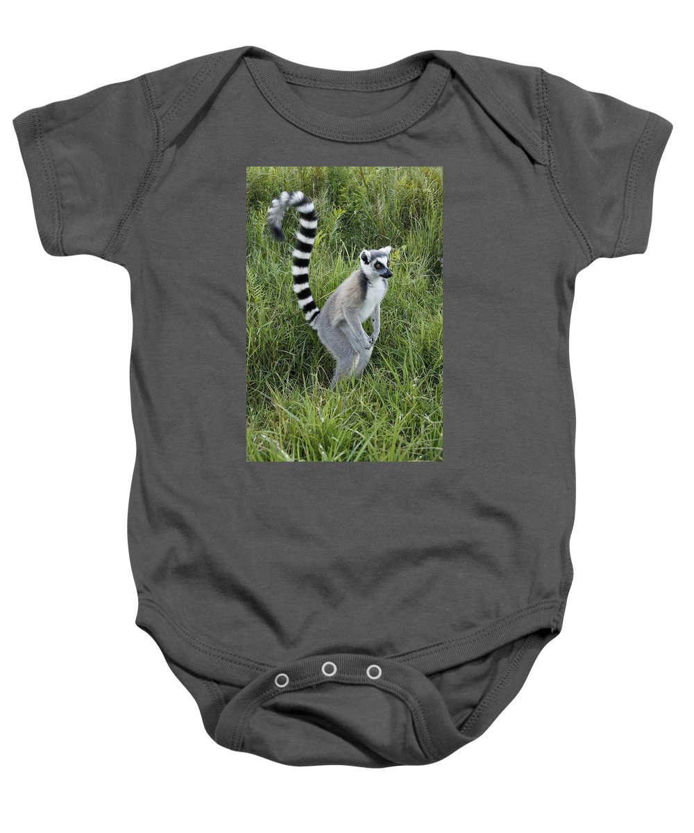 Africa Baby Onesie featuring the photograph Ring-tailed Lemur by Michele Burgess