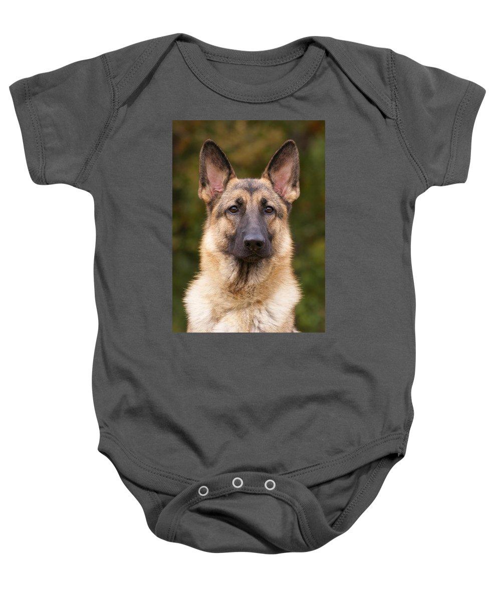 German Shepherd Baby Onesie featuring the photograph Sable German Shepherd Dog by Sandy Keeton