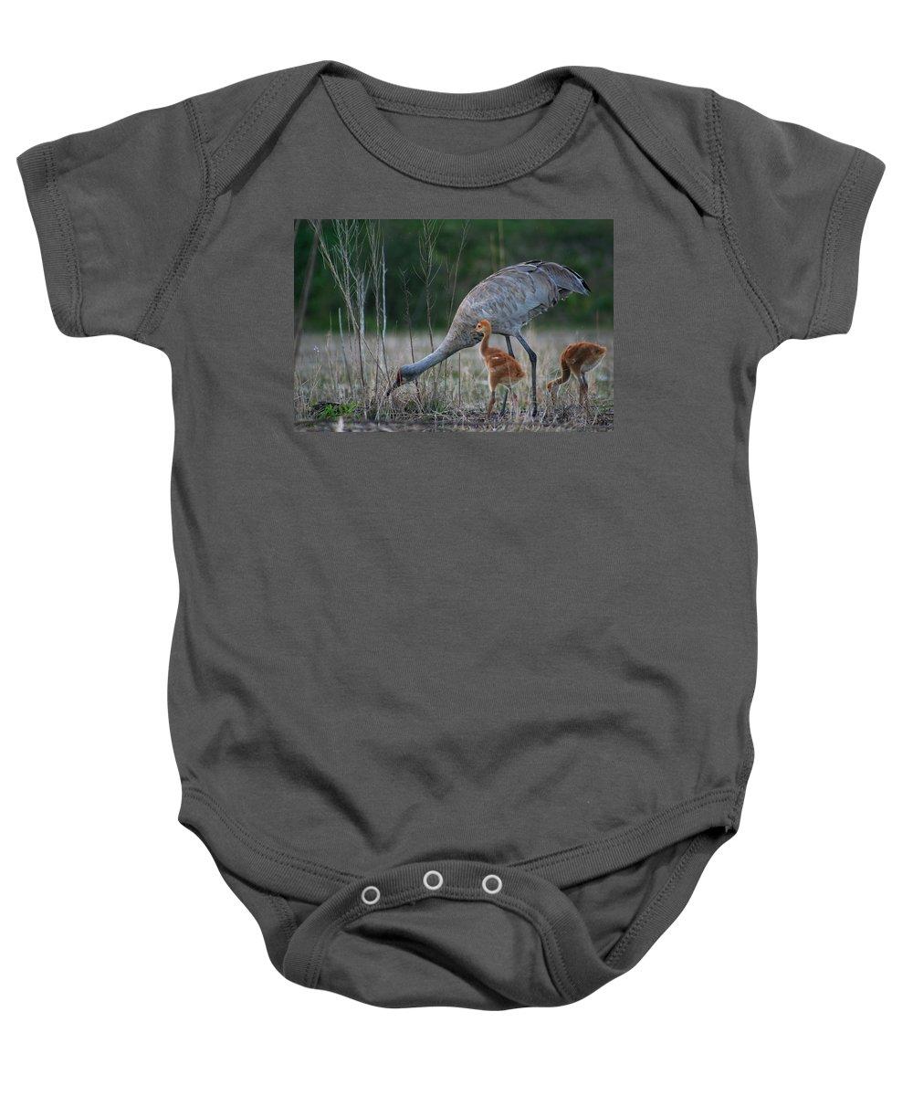 Sandhill Crane Baby Onesie featuring the photograph Sandhill Cranes 2 by Allan Lovell