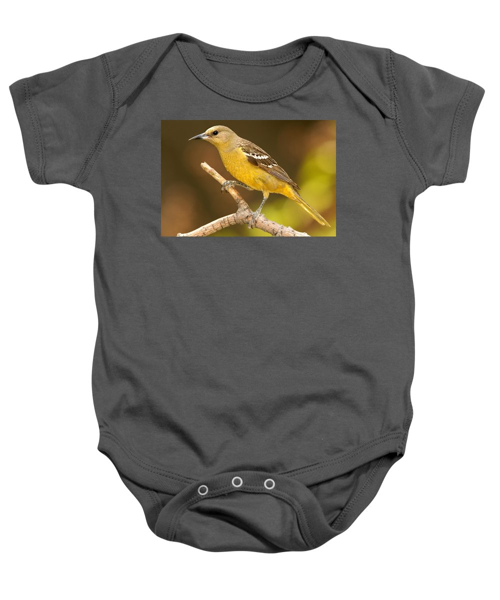 Oriole Baby Onesie featuring the photograph Scottie by Jack Milchanowski