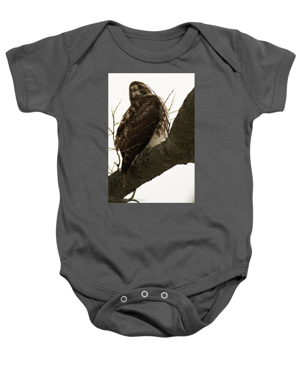 Raptor Baby Onesie featuring the photograph Searching by Crystal Heitzman Renskers