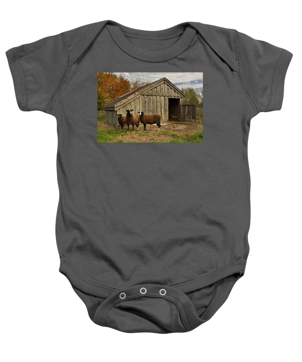 Agriculture Baby Onesie featuring the photograph Sheeps by TouTouke A Y