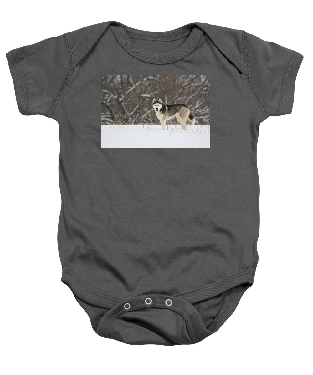 Landscape Baby Onesie featuring the photograph Siberian Husky 20 by David Dunham