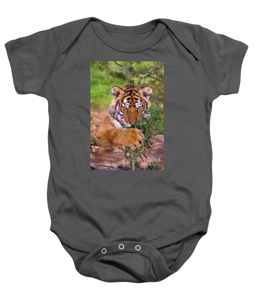 Siberian Tiger Baby Onesie featuring the photograph Siberian Tiger Cub Endangered Species Wildlife Rescue by Dave Welling