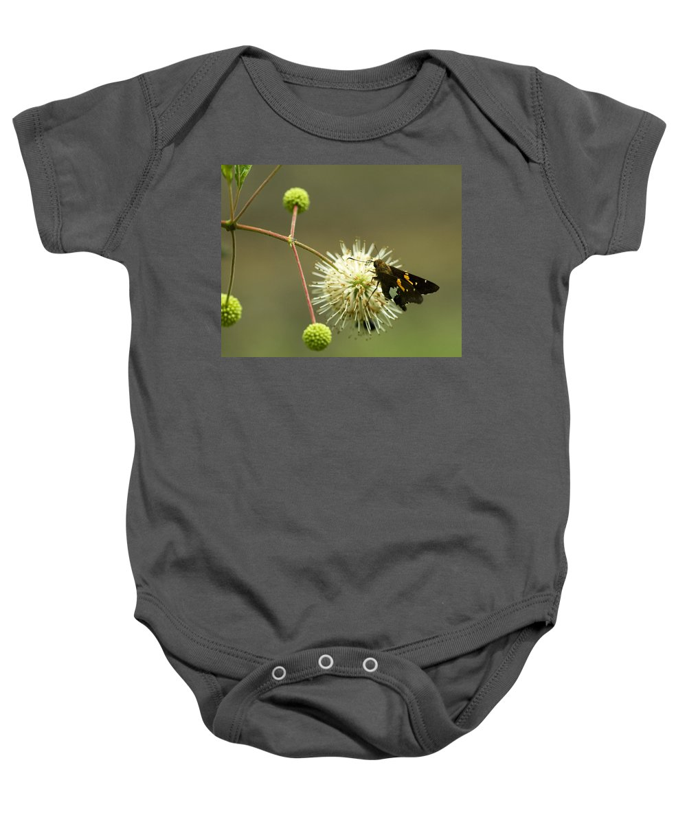 Silver Spotted Skipper Baby Onesie featuring the photograph Silver-spotted Skipper On Buttonbush Flower by Kathy Clark
