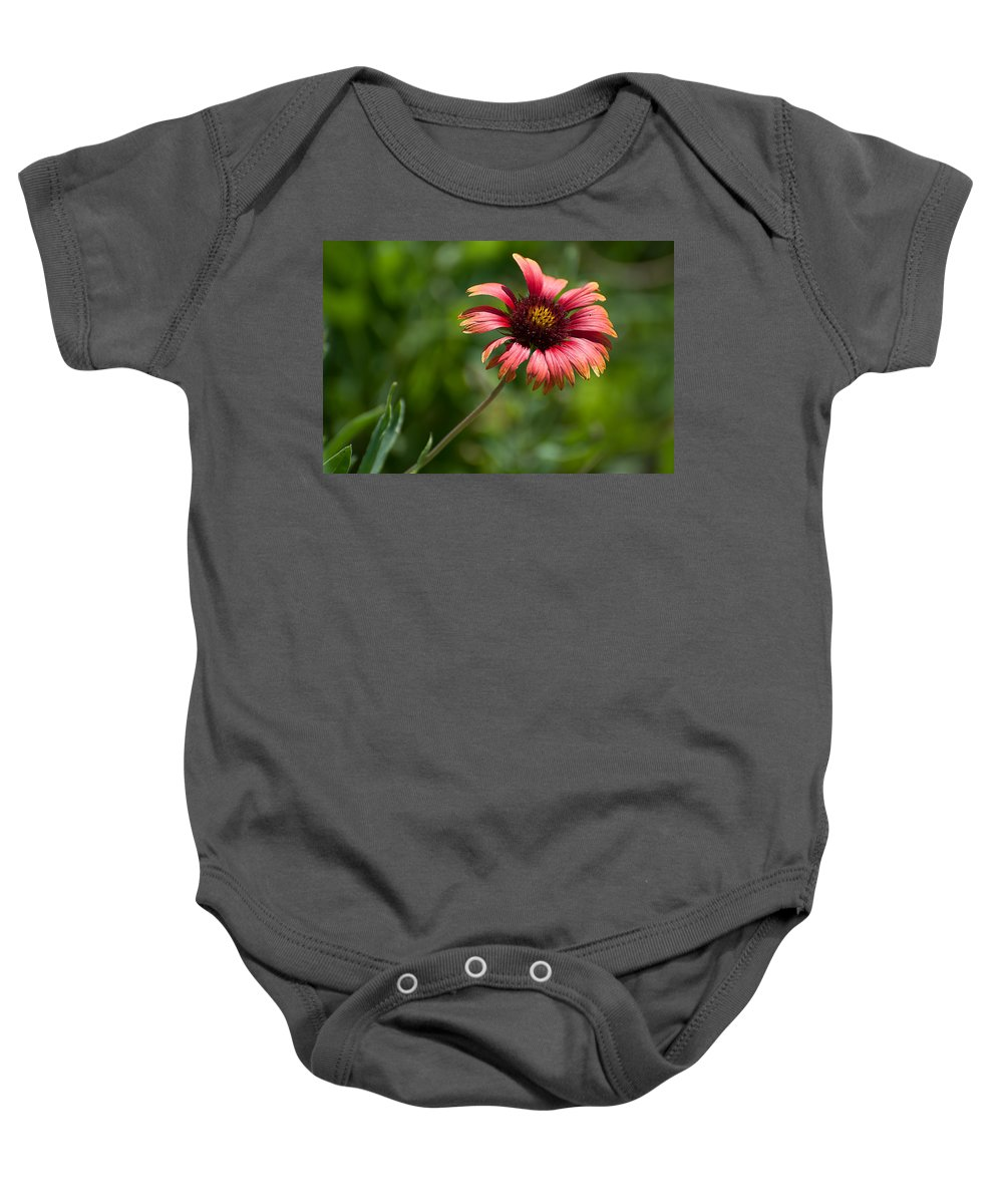 Red Baby Onesie featuring the photograph Single Red by Photos By Cassandra