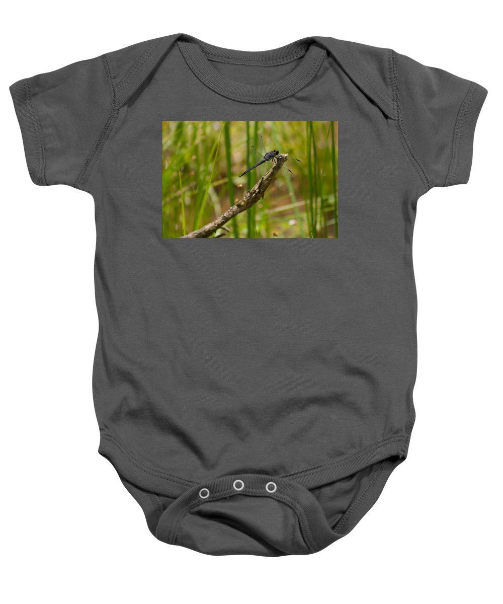 Slaty Skimmer Baby Onesie featuring the photograph Slaty Skimmer Sunning by Michael Porchik