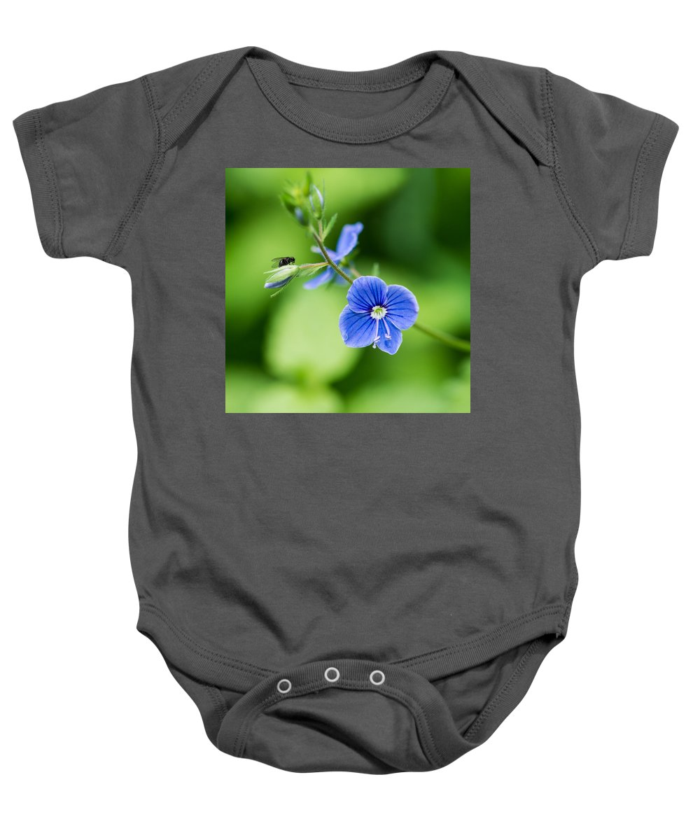 Beautiful Baby Onesie featuring the photograph Small Fly On A Small Wildflower - Featured 3 by Alexander Senin